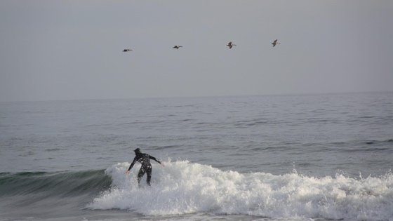 surfer with waves and birds