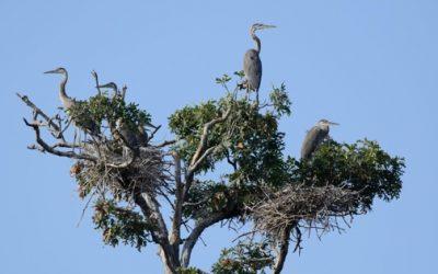 birds in next high in tree