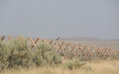 small bird on fence in wild landscape