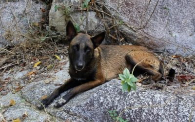 dog lying down on rocks with green plant